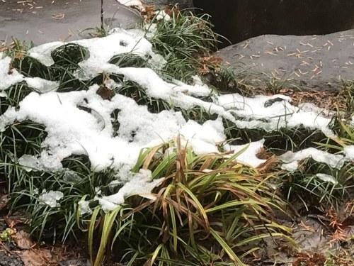 1.11.30雪化粧2 (1).jpg